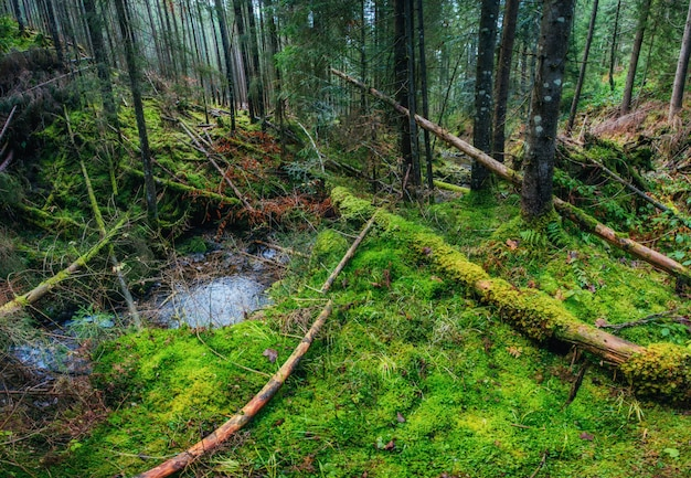 Поток между деревьями