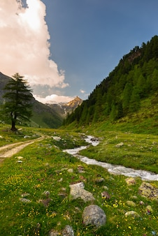 Stream flowing through blooming alpine meadow and lush green woodland high altitude mountain range at sunset