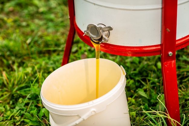 Stream of fresh honey flows from the honey extractor into the white bucket