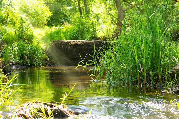 Ручей в тропическом лесу. окружающая среда солнечный пейзаж