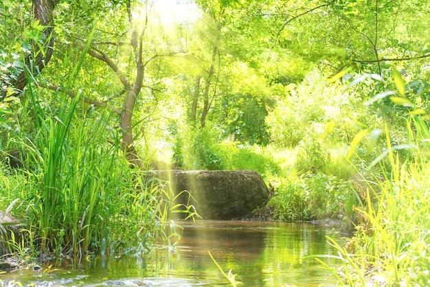 열 대 숲에서 스트림입니다. 환경 맑은 풍경