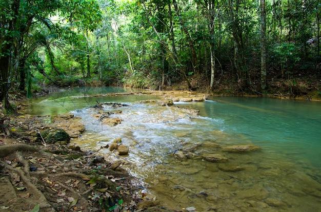 熱帯のジャングルを流れる