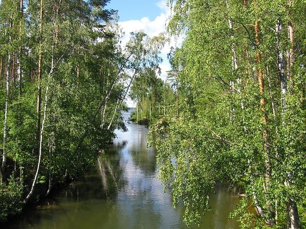 Stream water finland nature summer lake