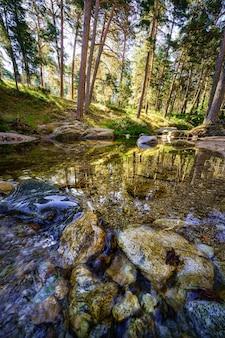 透明な水と森の木々の反射で流れます。ナバセラダ。