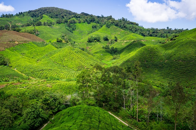 The street of cameron highlands - scenic hill station malaysia