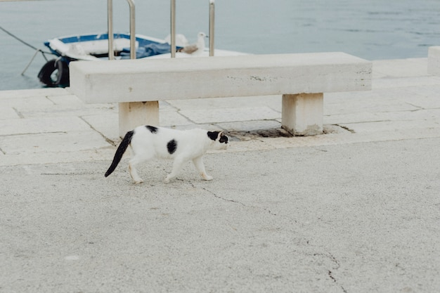 Street cat at a harbor