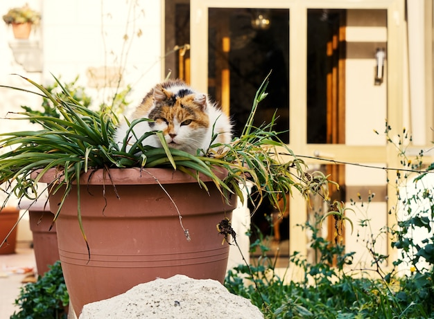 Street cat hides in a flower pot
