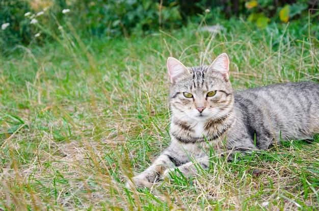 花壇のストリート猫。灰色のふわふわ猫が緑の芝生に座っています。