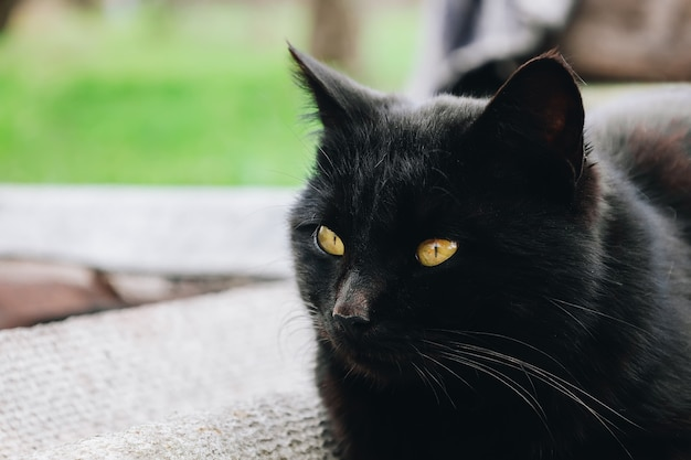 Street cat kitten with yellow eyes look at camera outdoors