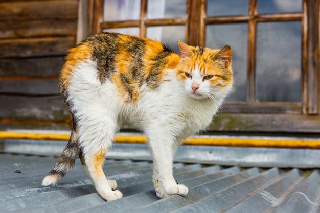 Уличный кот на крыше в деревне