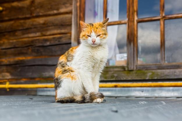 Уличный кот на крыше в деревне Premium Фотографии