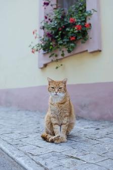 Street cat posing