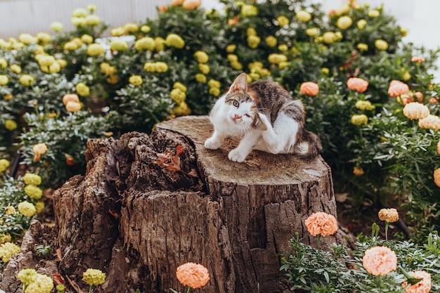 Street cat sitting in green park
