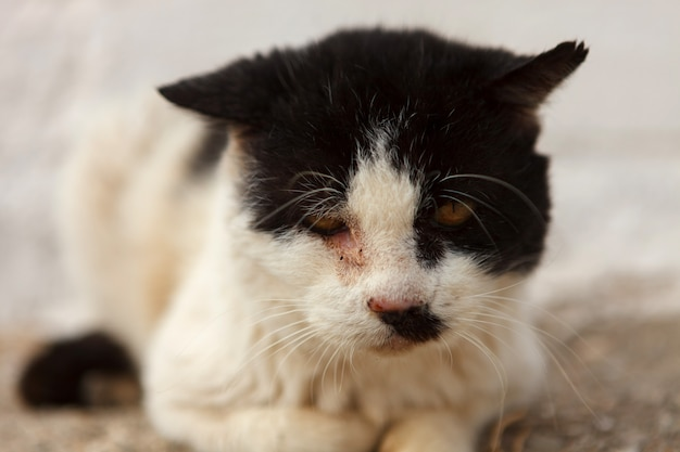 Street cat with a wounded eye