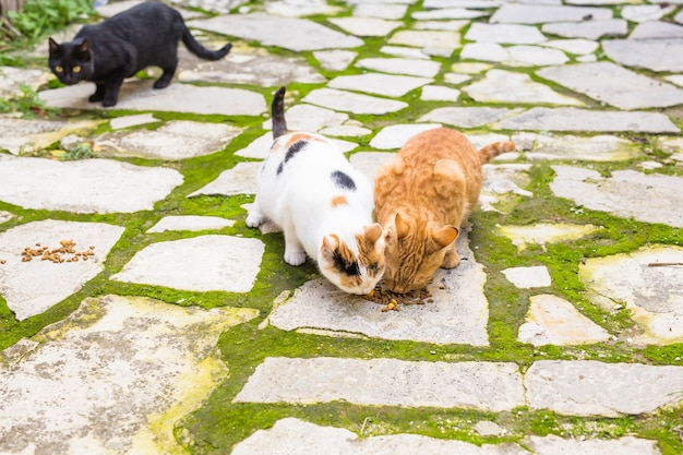 음식을 먹는 거리 고양이-노숙자 동물의 개념.