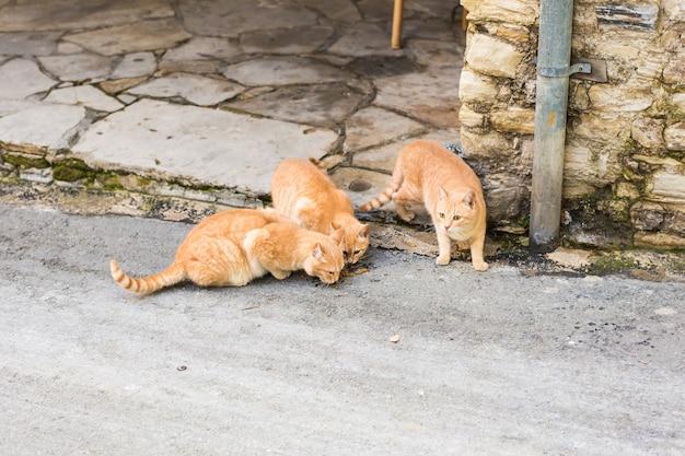 음식을 먹는 거리 고양이 - 노숙자 동물의 개념.