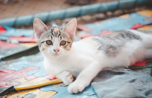 A street cute kitty in case for adoptation