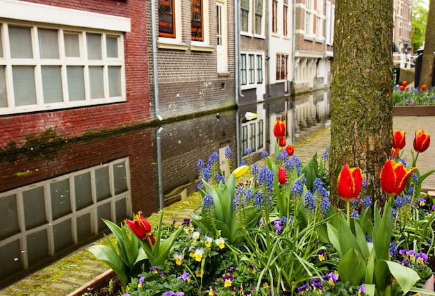 Street of delft in spring time, holland