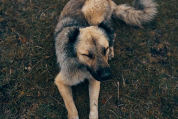 野良犬カラク野外風景旅行