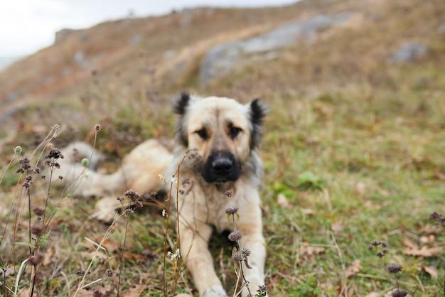 Street dog karakh outdoors landscape travel