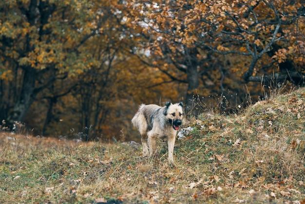 野良犬野外旅行友情無料レクリエーション