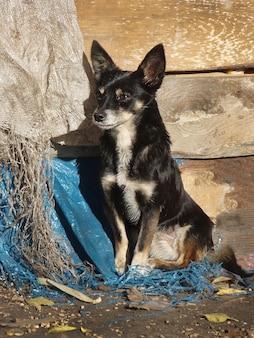 길거리 개가 먹고 싶어요. 집없는 개는 새로운 집이 필요합니다. 아기 길 잃은 강아지 노숙자. 도시 거리에 노숙자 개.