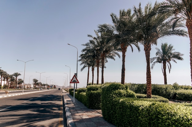 シャルムエルシェイクの通り。シナイ半島のリゾートタウンの熱帯の風景に囲まれたアスファルト道路