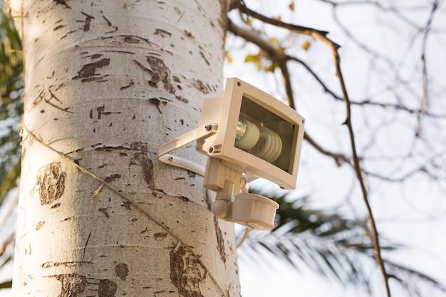 Уличный фонарь на дереве. освещение расположено на дереве