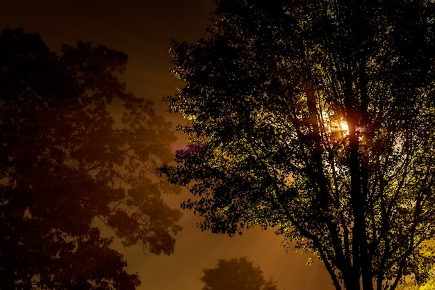The street near the tree at night is shrouded fog, lit by a lamp