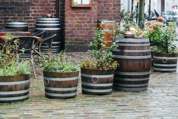 Street plants in wooden baskets and barrels