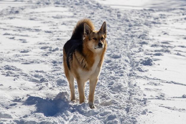 Уличная красная собака зимой на улице. фото высокого качества