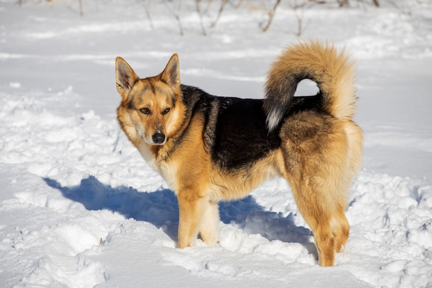Street red dog in winter on the street. high quality photo