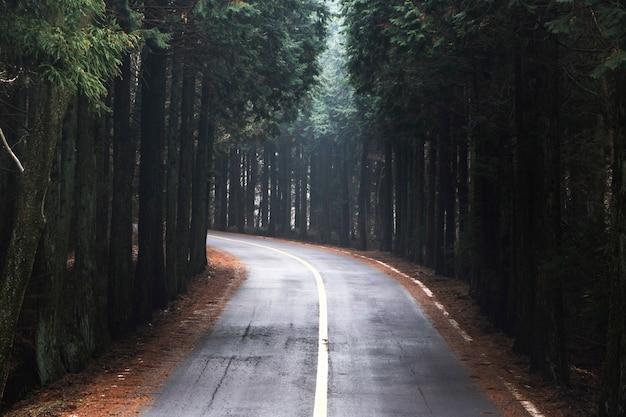Street trees in  jeju island, korea