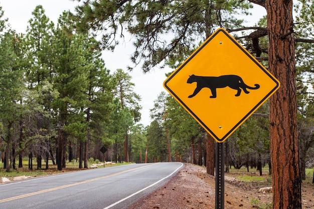 미국 그랜드 캐년 국립 공원의 도로 가장자리에 있는 거리의 광경