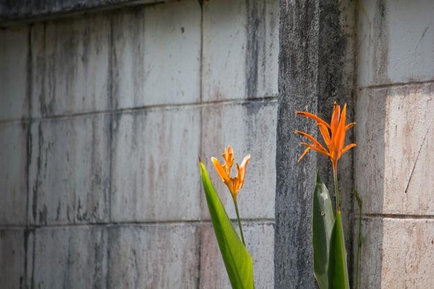Strelitzia reginae flower closeup (bird of paradise flower)