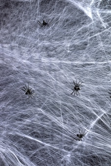 Stretched white web and black spiders, background for the holiday halloween