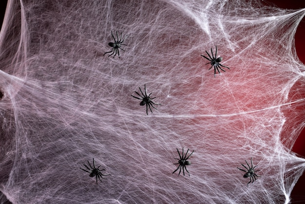 Stretched white web with red backlight and black spiders, background for the holiday halloween