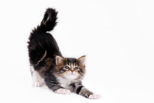 子猫のストレッチ