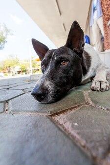 Stretdog