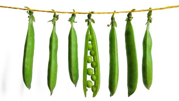 Нити зеленого горошка, свисающие с веревки на белом