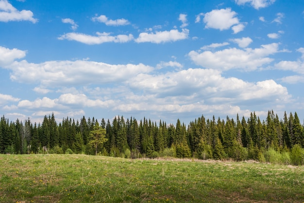 A strip of coniferous forest, meadow in front of him and a cloudy sky.
