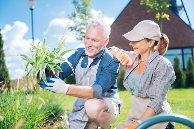 Striped apron. bearded mature man wearing striped apron and white gloves helping his wife near garden bed