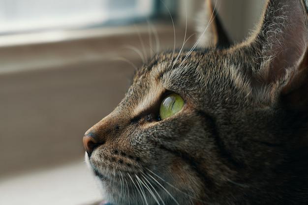 Полосатый кот в корзине возле подоконника котенок с зелеными глазами смотрит в окно крупным планом портрет животных