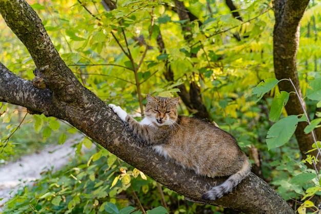 Striped cat lays on the branch of tree and meows in the park during the day.