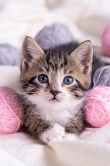 白いベッドの上でピンクとグレーのボールの糸のかせで遊ぶ縞模様の猫。少し好奇心が強い子猫