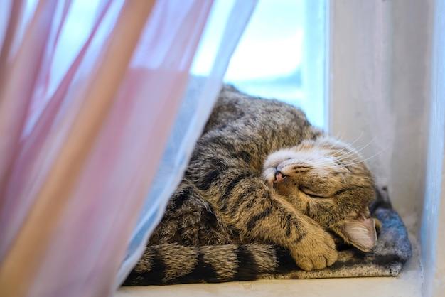 Полосатый кот спит на подоконнике у окна
