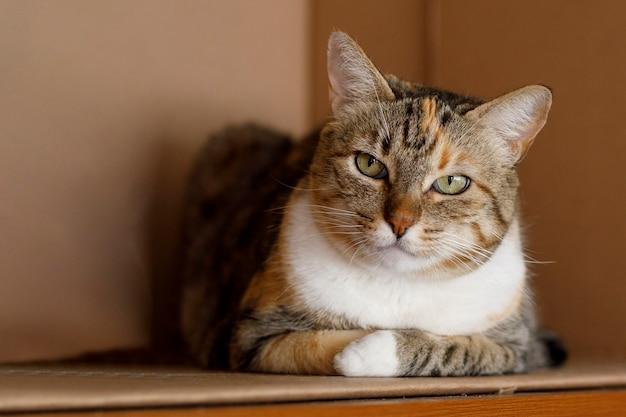 Полосатый кот с сердитым лицом отдыхает в картонной коробке