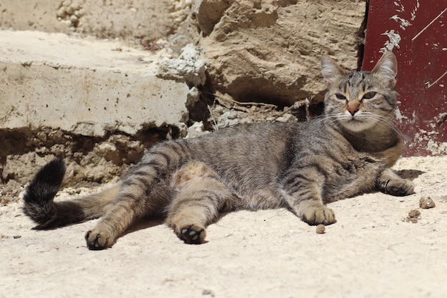 Striped domestic cat playing on the ground under the warm sun at the iron gate