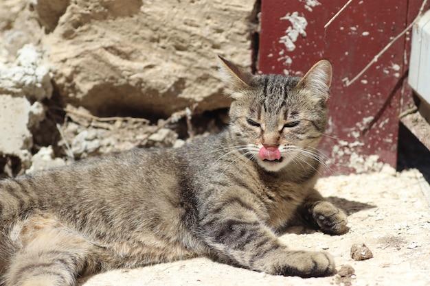 Полосатая домашняя кошка играет на земле под теплым солнцем у железных ворот