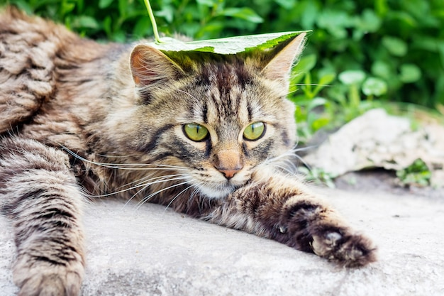 A striped, fluffy cat with a green leaf on his head lies in the grass